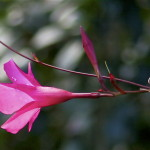 Flower©PK